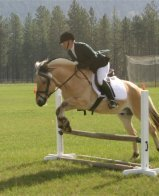 Norwegian Fjord Horse Breed Pure Breed Tarpan Wild Horse
